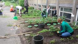 agrar_pflanzen_BFA